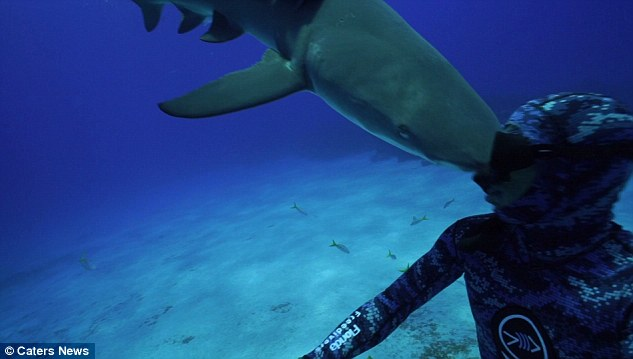 3642BBBC00000578-3689552-He_said_he_didn_t_think_it_was_intentional_as_the_shark_pictured-a-2_1468488990613