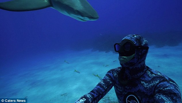 3642BBC300000578-3689552-Michael_Dornellas_pictured_was_diving_in_the_Bahamas_with_friend-a-1_1468488976348